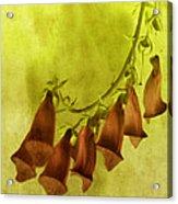 Fancy Foxglove Acrylic Print by Bonnie Bruno