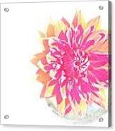 Fancy Free Acrylic Print