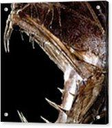 Fangtooth Fish Acrylic Print