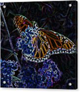 Fantasy Butterfly Acrylic Print