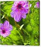 Fantasy Pink Dahlia Acrylic Print