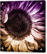 Fantasy Sunflower Acrylic Print