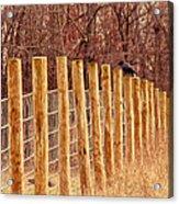 Farm Fence And Birds Acrylic Print