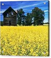 Farm House And Canola Field, Holland Acrylic Print