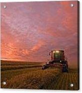 Farmer Harvesting Oat Crop Acrylic Print