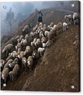 farmers bring their sheep to graze. Republic of Bolivia. Acrylic Print