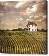 Farmhouse And Cornfield Acrylic Print