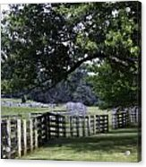 Farmland Shade Appomattox Virginia Acrylic Print
