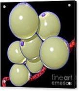 Fat Cells Acrylic Print
