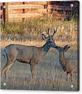 Father And Son Moment Acrylic Print