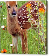 Fawn In Flowers Acrylic Print