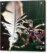 Feather And Spider Acrylic Print