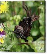 Feather Flash Acrylic Print