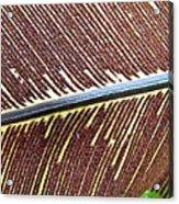 Feather Or Fern Acrylic Print