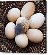 Feathered Eggs Acrylic Print