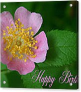 February Birthday Acrylic Print