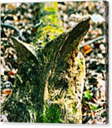 Feline Carved In Nature Acrylic Print