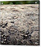 Fell By The Mighty Bark Beetle Acrylic Print