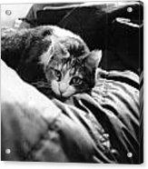 Female Cat Laying Down Acrylic Print