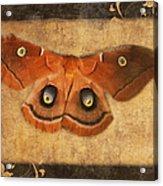 Female Moth Acrylic Print