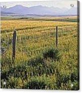 Fence And Barley Crop, Near Waterton Acrylic Print