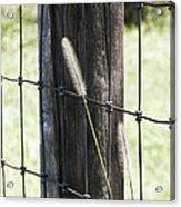 Fence Line Acrylic Print