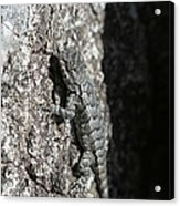Fence Lizard Acrylic Print by Sean Green
