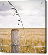 Fence Post Acrylic Print