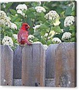 Fence Top Acrylic Print