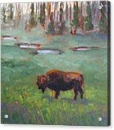 Ferdinand Yellowstone Np Acrylic Print by Karin  Leonard