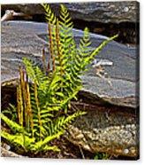 Fern And Rocks Acrylic Print