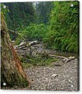 Fern Canyon Trunk Acrylic Print