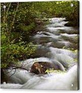 Fern Creek Horizontal Acrylic Print