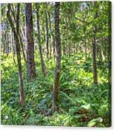 Fern Forest Acrylic Print