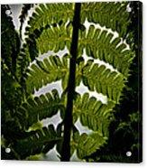 Fern Acrylic Print by Odd Jeppesen