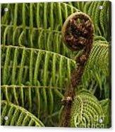 Fern Palm New Zealand Acrylic Print