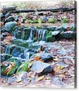 Fern Spring In Autumn Acrylic Print