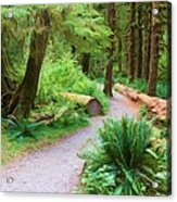 Ferns And Mosses Acrylic Print