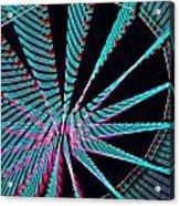 Ferris Tracings 560 Acrylic Print