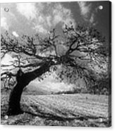 Field At Rest Acrylic Print