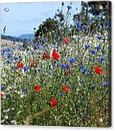 Field Of Colour Acrylic Print