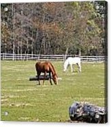 Field Of Horses Acrylic Print