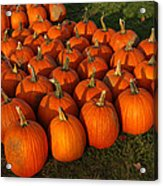 Field Of Pumpkins Acrylic Print