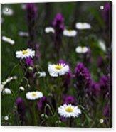 Field Of Spring Flowers Acrylic Print