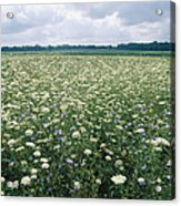 Field Of Wildflowers, Montezuma Acrylic Print