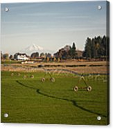 Field With Irrigation Pipes Acrylic Print by David Buffington