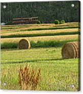 Fields Of Gold Acrylic Print by Shawn Hughes