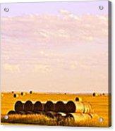 Fields Of Plenty Acrylic Print by Kate Purdy