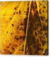 Fig Leaf Acrylic Print