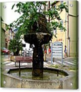 Fig Tree Fountain In Cassis Acrylic Print